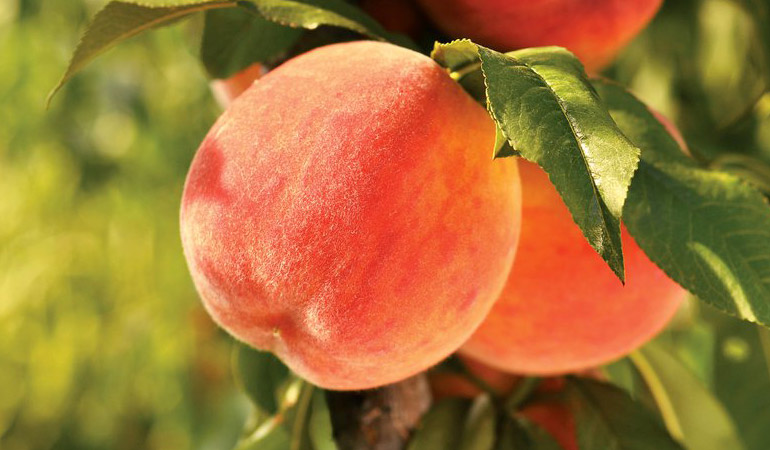 Extreme Heat Creates Short Supplies for Summer Fruit