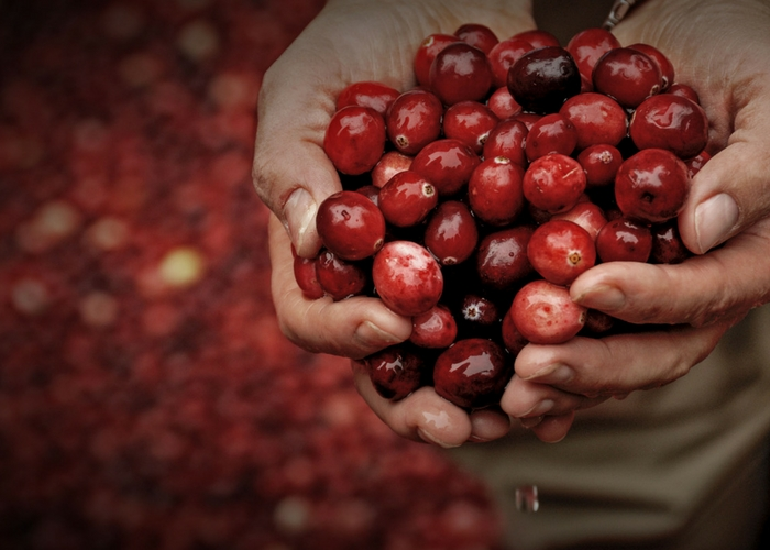 Limited Supplies of Organic Cranberries Projected for Thanksgiving
