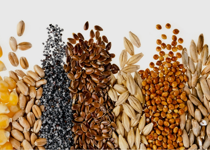 Seeds of Change: NOSB Meetings to Propose Changes to Guidelines for Organic Seed Use
