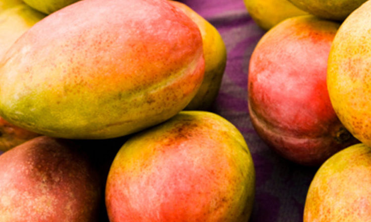 Peru & Ecuador Start Organic Mango Season