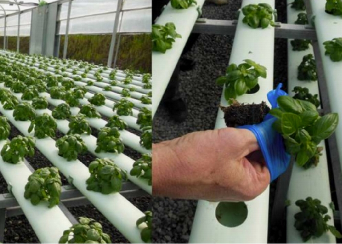 Bioponics: Is the End Near for Organic Labeling?