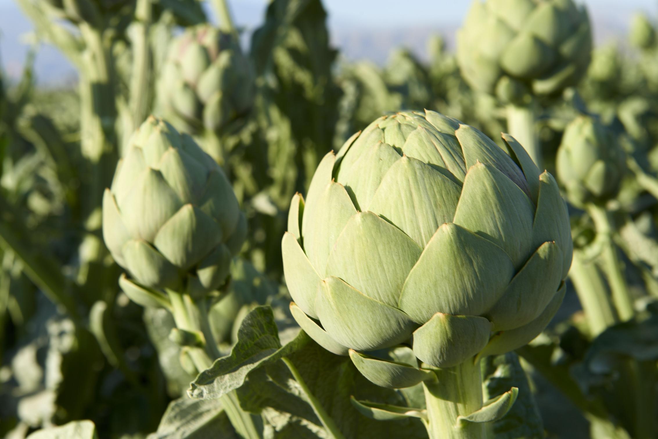 Ocean Mist Farms Offers Organic Artichoke Promotion