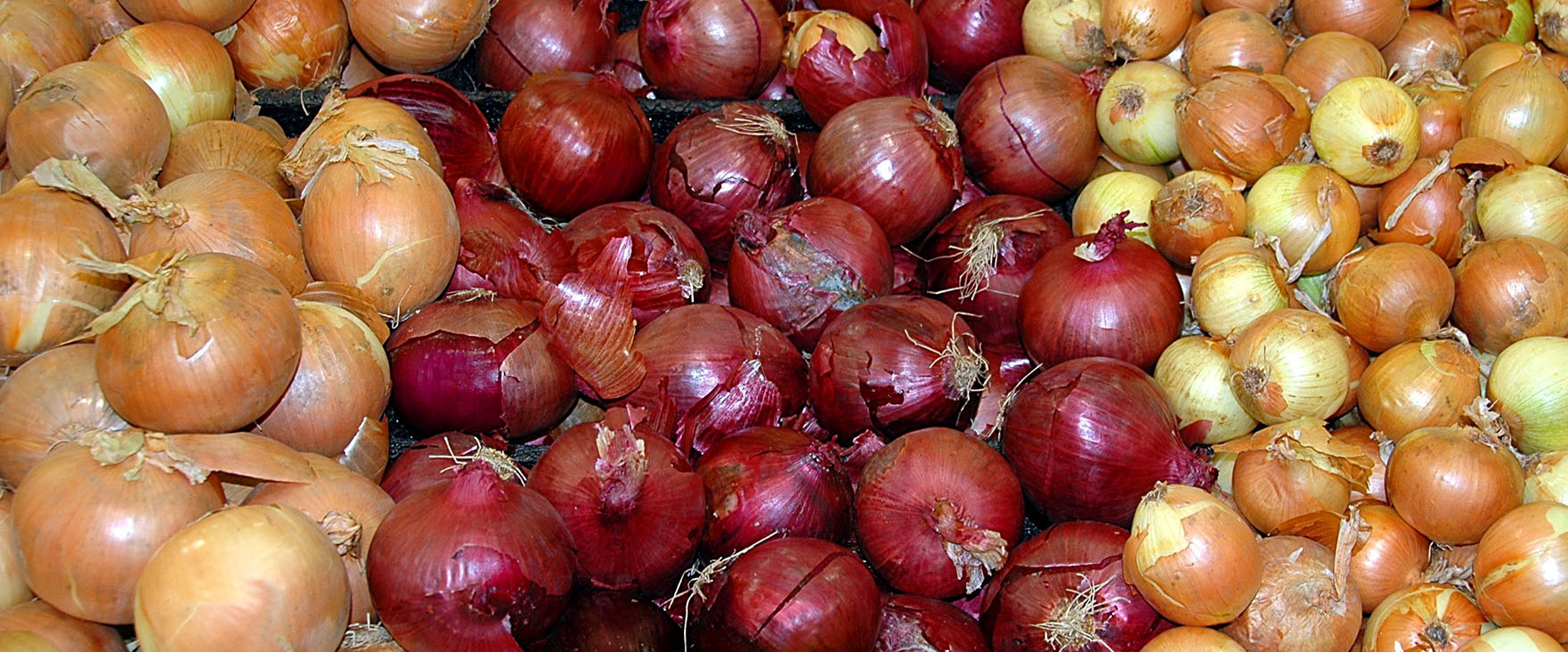 Organic Onions Heading Into Tight Supply Situation