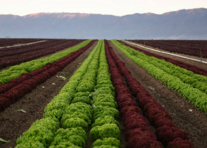 Organic Week in Brief: Five Need-to-Knows