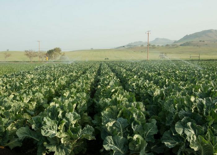 California Organic – A Vision for the Future