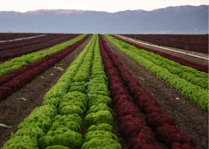 Organic Week in Brief: Five Need to Knows