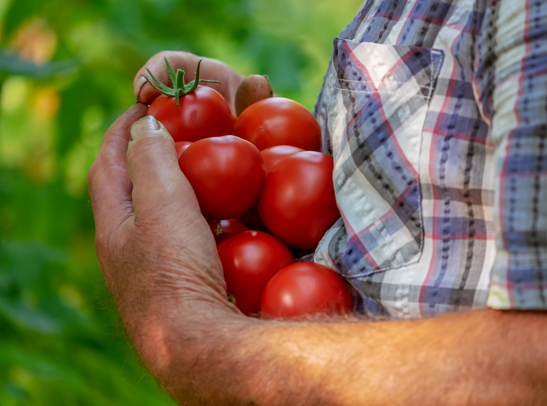 What the US War on Mexican Tomatoes Means for Organic