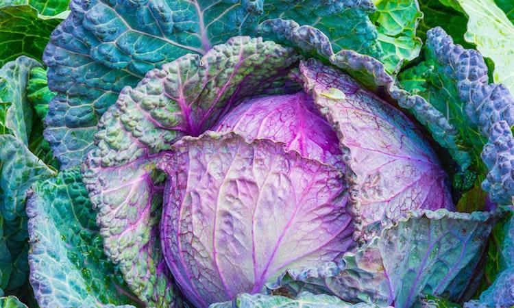 Top 5: Organic News to Help You Grow